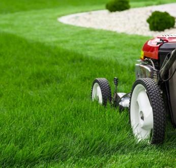 Gardening Clean Up